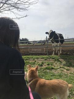 女性,犬,空,動物,屋外,牧場,草,人物,人,馬,柴犬