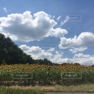 空の写真・画像素材[212864]