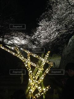 屋外,夜桜,樹木