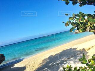 水の体の近くのビーチでヤシの木のグループの写真・画像素材[1234327]