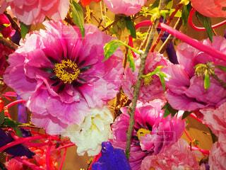 風景,花,ピンク,カラフル,景色,花びら,元気,たくさん,明るい,華やか,カラー,草木