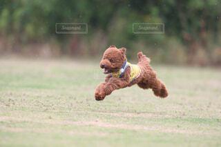 飛行犬の写真・画像素材[4474663]