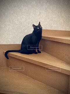 カメラを見ている猫の写真・画像素材[4553741]