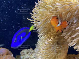 動物,魚,水族館,水面,葉,水中,カクレクマノミ,金魚,珊瑚礁,クマノミ,イソギンチャク,コーラル,腔腸動物,海洋無脊椎動物,海洋生物学,生命体,魚の供給
