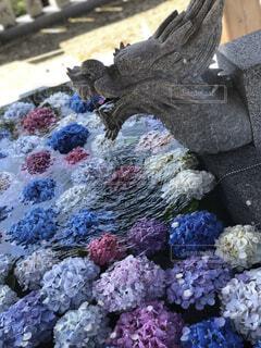 花,屋外,神社,葉,紫陽花,花手水