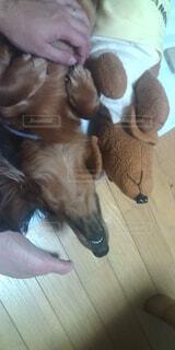 犬,動物,屋内,茶色,ぬいぐるみ