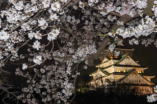 花,桜,夜,夜景,大阪,城,花見,夜桜,樹木,草木