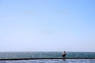 自然,海,空,鳥,屋外,ビーチ,水面,平和,鳩,日中,1日
