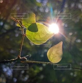 葉,樹木,草木,木洩れ日