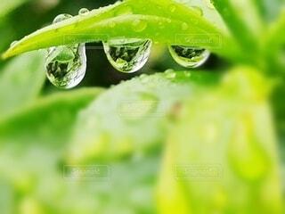 屋外,葉,梅雨,雨だれ