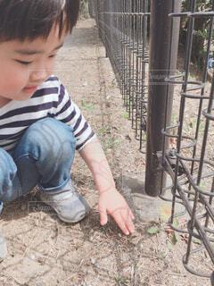 たんぽぽを見つけた男の子の写真・画像素材[4480691]