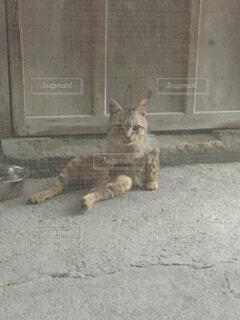 冷たい石畳でくつろぐ猫の写真・画像素材[4480700]