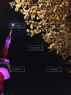 月明かりの桜とタワーの写真・画像素材[4480716]