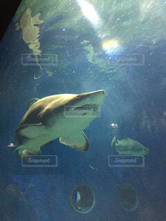 水の下で泳ぐ魚の写真・画像素材[4480719]