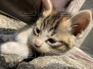 雨どいと地面の間に落ち着いた仔猫の写真・画像素材[4491250]