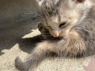 毛づくろいしていたら眠くなった仔猫の写真・画像素材[4491252]