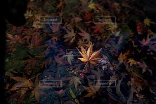 秋,紅葉,葉,落葉