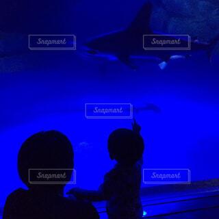 魚,水族館,暗い,人物,人,画面