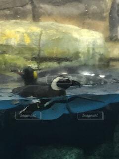 動物,鳥,屋外,水面,絵画,海獣,図面