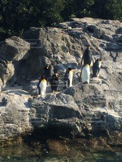 動物,鳥,屋外,山,ペンギン,岩,水鳥