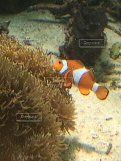 魚,水族館,水面,葉,珊瑚礁,コーラル,海洋無脊椎動物,海洋生物学