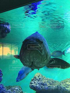 動物,魚,屋内,プール,水族館,水面,葉,泳ぐ,水中,カメ,ウミガメ,爬虫類,海獣