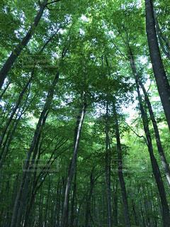 公園,森林,屋外,樹木,ジャングル,草木