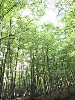 空,公園,森林,屋外,樹木,草木