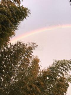 自然,屋外,虹,樹木