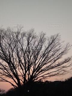 空,屋外,夕焼け,樹木,草木