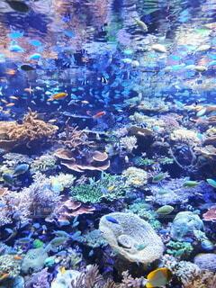 自然,魚,屋外,水族館,水面,珊瑚礁,コーラル,海洋無脊椎動物,海洋生物学,生命体