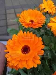 自然,花,オレンジ,カラー,草木