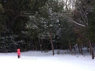 空,冬,雪,屋外,樹木,こびと