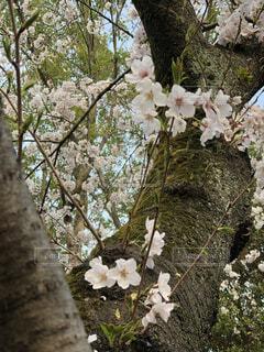 花,春,屋外,樹木,結婚,生命,成長,力強い,引越し,草木,ブロッサム,フローラ,実を結ぶ