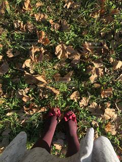 花,屋外,葉,草木,ガーデン