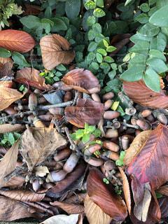 自然,秋,屋外,どんぐり,キノコ,草木