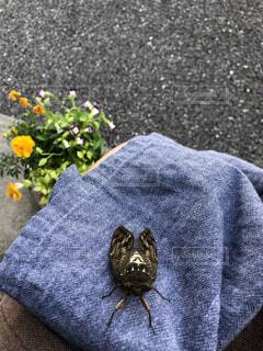 猫,花,夏,屋外,縁側,人物,人,グレー,セミ,草木,こんにちは