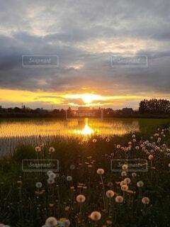 自然,空,夕日,太陽,雲,夕焼け,夕暮れ,水面,夕方,水田,たんぽぽ,稲,水面に映る,夕暮れどき,水に映える