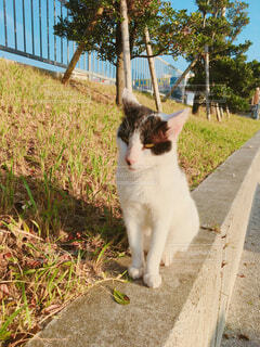 猫,動物,屋外,白,草,縁石