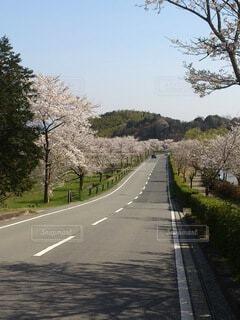 空,桜,橋,屋外,川,樹木,道,旅行
