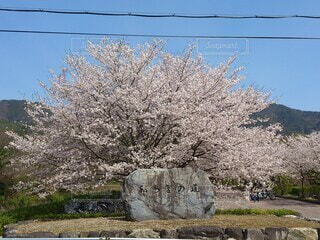 空,建物,花,春,桜,屋外,草,樹木,岩,ブロッサム