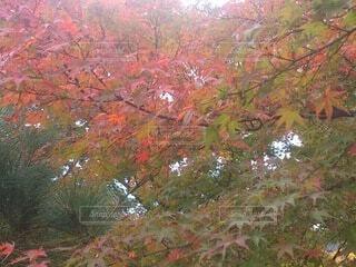 空,秋,紅葉,屋外,葉,樹木,落葉,草木