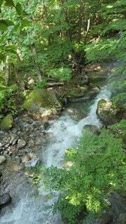 自然,屋外,川,水面,水辺,山,滝,樹木,初夏,熊,運河,衝撃,川底,クリーク,モス,水辺の森,ストリーム,水資源,ミネラル温泉,アロヨ,非血管陸上植物,河川地形