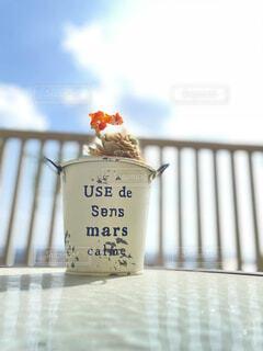 花,花瓶,青い空,テラス,眩しい,多肉植物,白い雲,テキスト,ブリキ缶