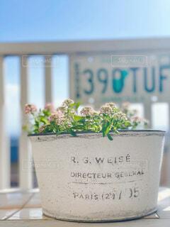 海,花,青空,花瓶,植木鉢,カップ,観葉植物,草木,オーシャンビュー,墓地,ナンバープレート