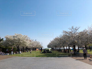 空,公園,屋外,青い空,桜並木,爽やか,樹木,草木