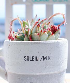花,屋内,青空,青い海,テラス,植木鉢,カップ,観葉植物,多肉植物