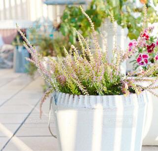 花,花瓶,テラス,ベランダ,植木鉢,カップ,観葉植物,花柄,草木,カルーナ