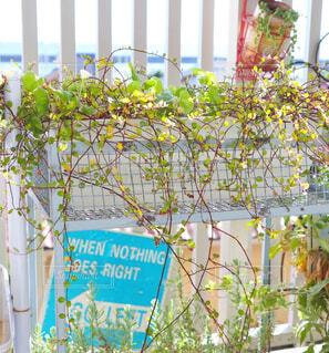 花,植木鉢,観葉植物,グリーン,ワイヤープランツ,草木,テキスト