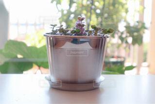 花,コーヒー,屋内,花瓶,テーブル,植木鉢,食器,カップ,観葉植物,草木